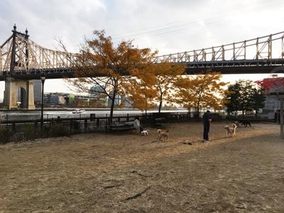 Top 8 Dog Parks & Runs in Manhattan