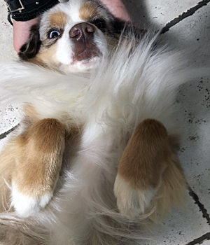 What to do when your dog is freaky